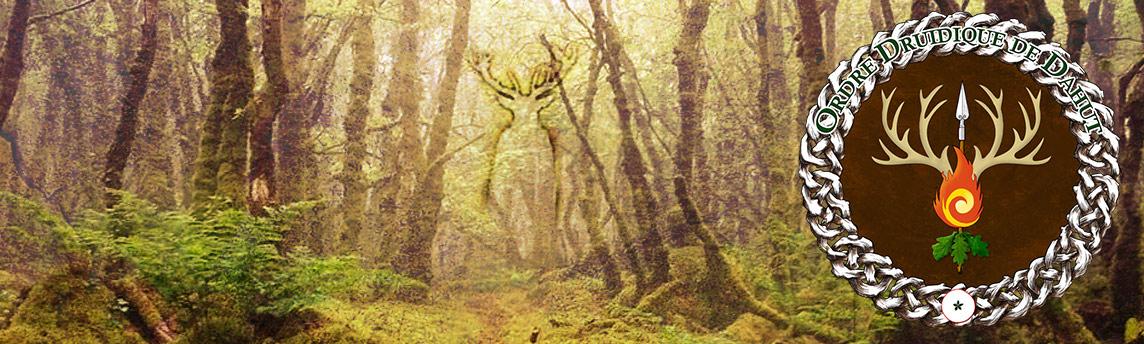 Neved, brume dans les bois