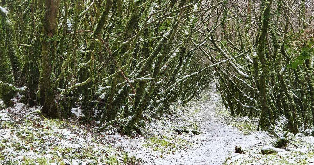 un paysage sous la neige sur le chemin de la cérémonie